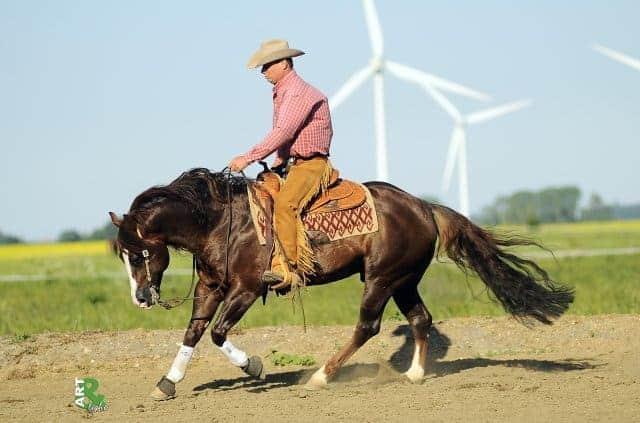Quarter Horse Stallions