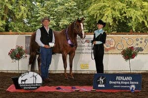 Blazin Remedy Halter Geldings champion