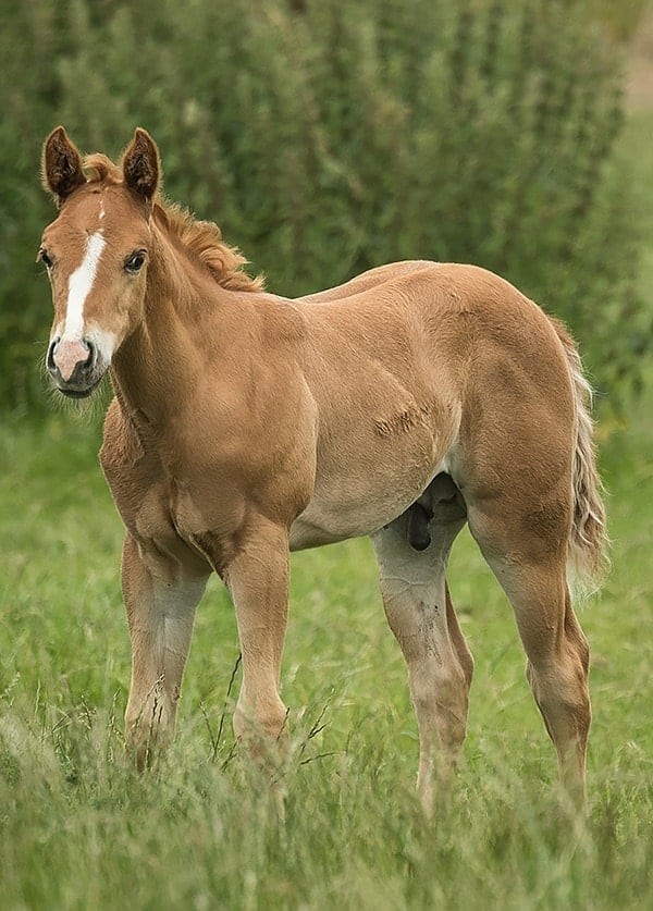 home-horses-for-sale
