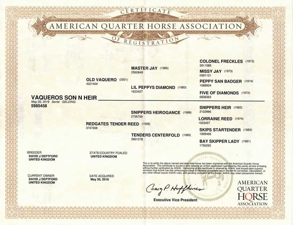 vaqueros son n heir AQHA papers (bloodlines)