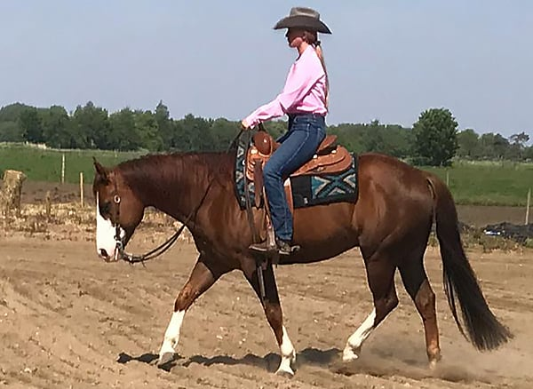 Starting western riding training